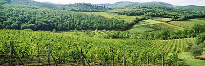 Chianti Vines Photographs Prints