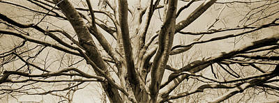 Designs Similar to Low Angle View Of A Bare Tree