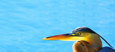 Bird Watcher Photographs