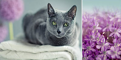 Designs Similar to Russian Blue Collage