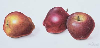Apple Drawings