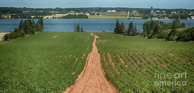 Designs Similar to Pathway To River Bank