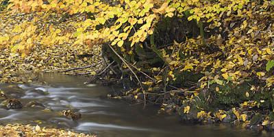 Designs Similar to Autumn Flow by Ian Middleton
