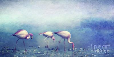 Designs Similar to Flamingos by Priska Wettstein