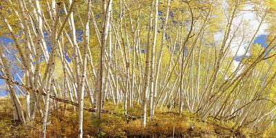 Designs Similar to Golden Forest Fantasy