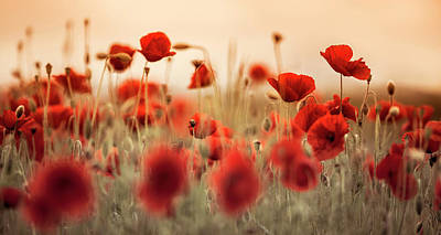 Designs Similar to Summer Poppy Meadow