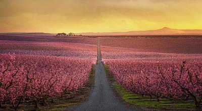 Peach Blossoms Prints