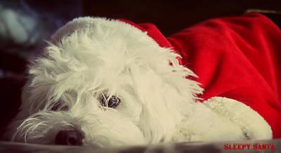 Maltese Dog Christmas Cards Art Prints