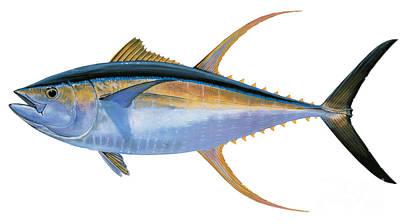 Striped Marlin Original Artwork