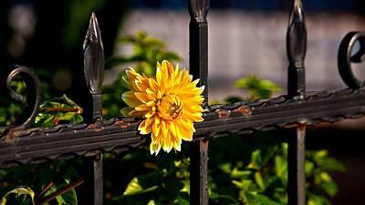 Goldenseal Photographs