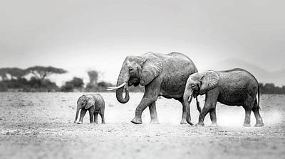 Designs Similar to The Elephant Family