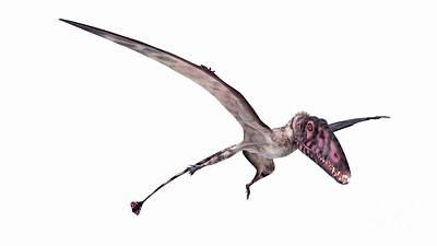 Designs Similar to Illustration Of A Dimorphodon