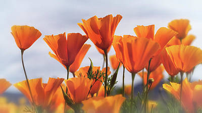 Designs Similar to Golden Poppies In The Breeze