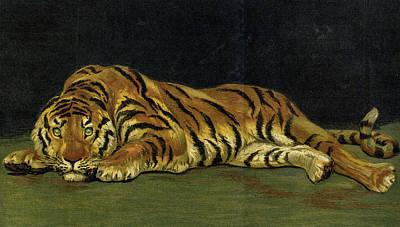 Designs Similar to Untamable, Tiger