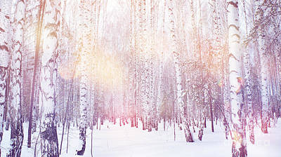 Designs Similar to Winter Magic Birch Grove
