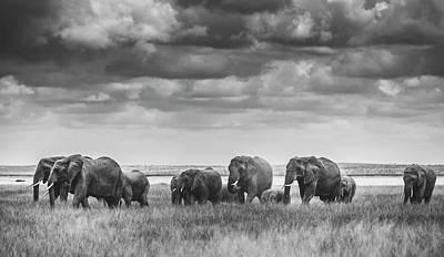 Designs Similar to Elephant Family by Vedran Vidak