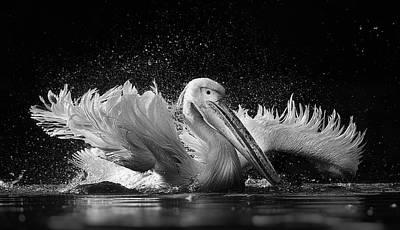Pelican Landing Prints