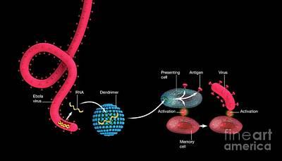 Designs Similar to Mrna Ebola Vaccine