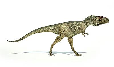 Albertosaurus Art Prints