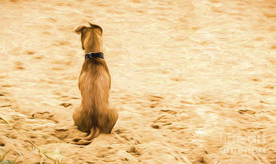 Designs Similar to Dog Sitting On Beach