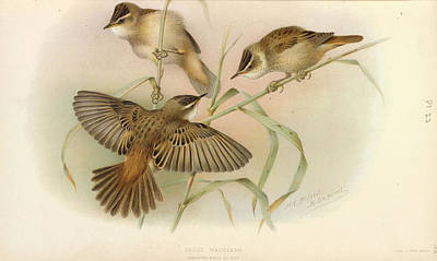 Designs Similar to Juvenile Sedge Warbler
