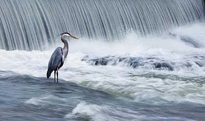 Great Heron Photographs