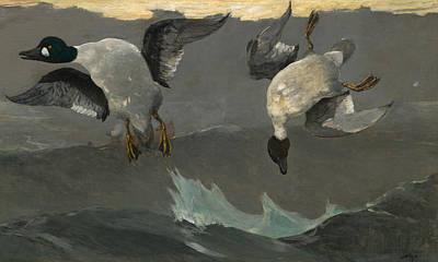 Two Ducks In Flight Paintings