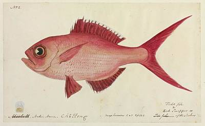 Designs Similar to Red Snapper Fish