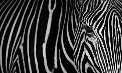 Designs Similar to Stripes by Sergio Saavedra Ruiz