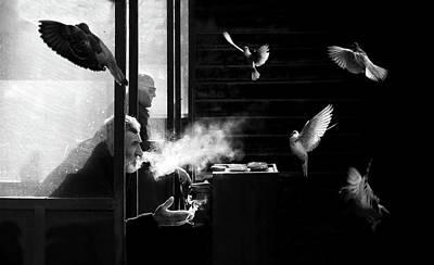 Canary Photographs