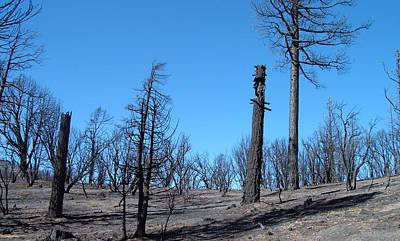Designs Similar to Burned Trees In California