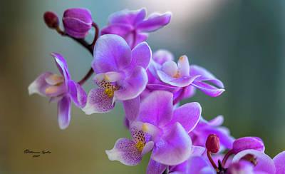 Floristry Photographs