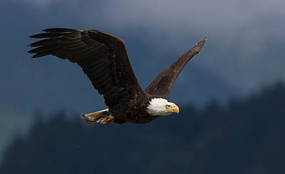 Designs Similar to Bald Eagle With Food