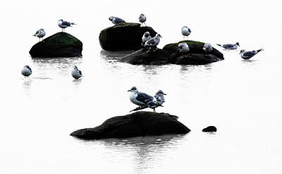 Designs Similar to Gulls On The Rocks