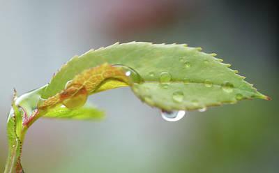 Designs Similar to Rose Leaf After Rain