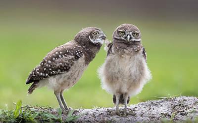 Florida Bird Photographs