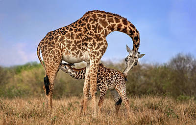 Designs Similar to Giraffe With Cup