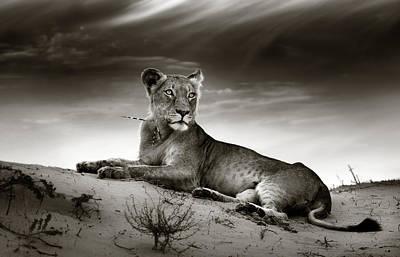 Cat Photographs Prints