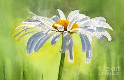 White Daisy Paintings