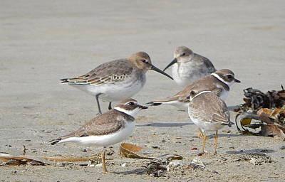 Designs Similar to Shorebirds In Nova Scotia
