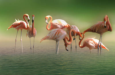 Designs Similar to The Flamingos by Art Spectrum