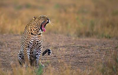 Designs Similar to Yawning Leopard
