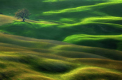 Designs Similar to Oak... by Krzysztof Browko