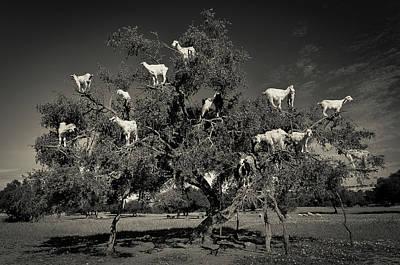 Designs Similar to Argan Loving Goats