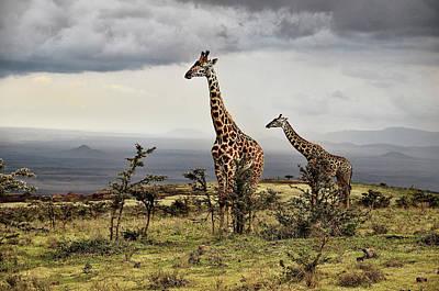Designs Similar to Giraffe by Giuseppe D\\\amico