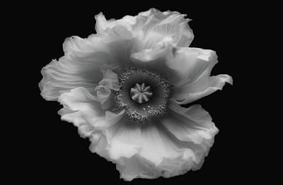 Designs Similar to Poppy In Mono
