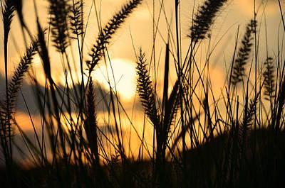 Sunset Scenes Digital Art Prints