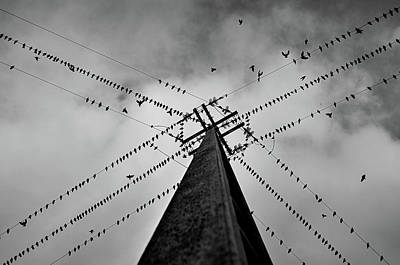 Designs Similar to Wired by Rui Caria