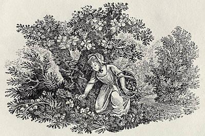 Bewick Prints