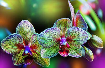 Orchids Digital Art